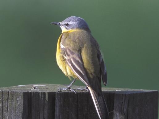 2001 nyarától minden nyáron megszervezésre kerül az Ornitológiai Madárgyűrűző Tábor, itt a Vrana-tó partján.