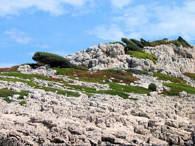A Kornati-szigetcsoport növényvilága.