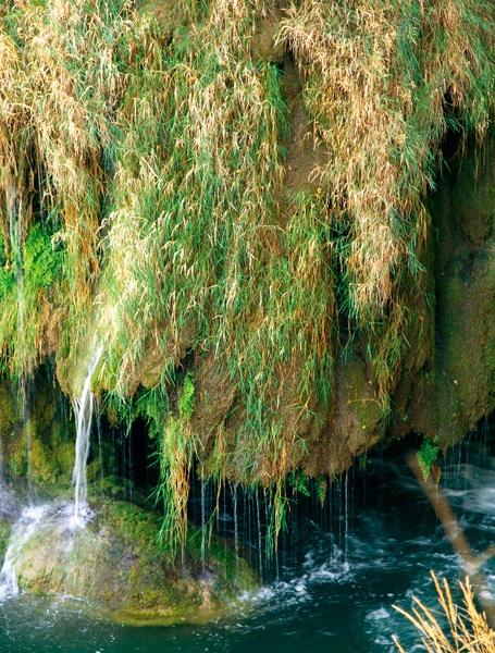 A Krka-folyó vidékén számos növény- és állatfajt találunk.