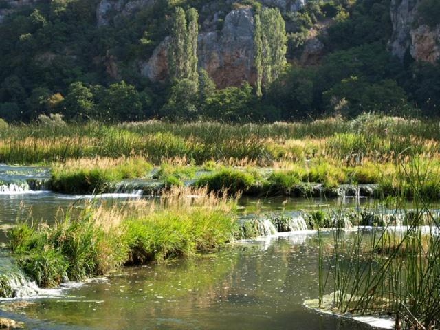 A nádasok szélén számos más vízinövény faj is él, mint például a tündérrózsa, a vízitök, a gyűrűs süllőhínár, a füzéres süllőhínár...stb.