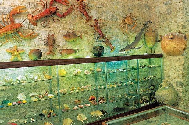 Malakológiai múzeum, Baska Voda